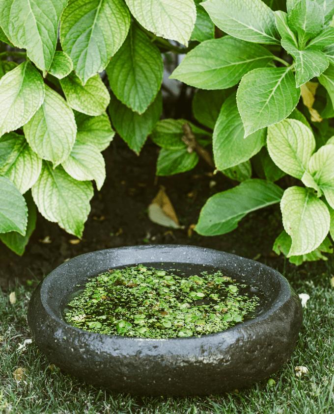 Fuente jardin mediana